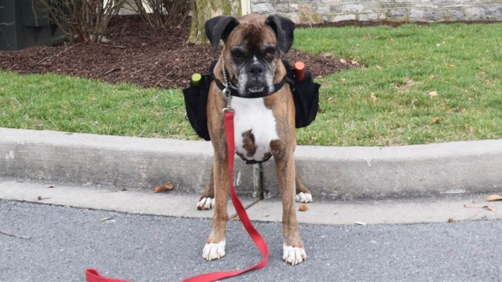 Coronavirus: Cute dog delivers wine during lockdown