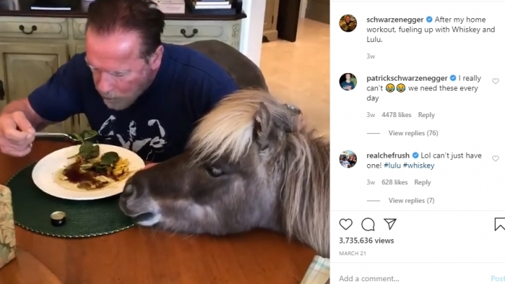 PHOTO: Schwarzenegger spends time at home with a donkey and a pony in self-isolation