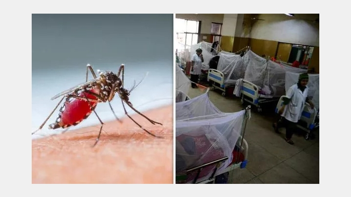 Singapore may hit the record with Dengue Cases; two diseases at the same time