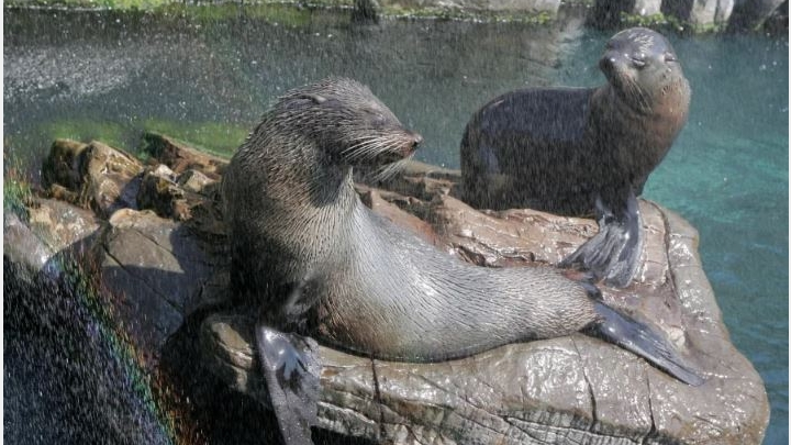 Very sorry! Due to Covid, zoo animals are left homeless. Probably someone will need to euthanize