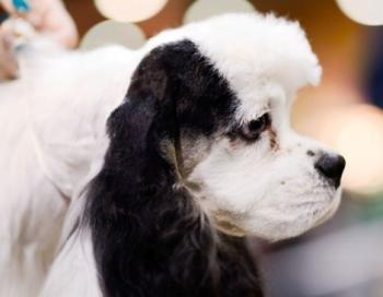 Pavisam drīz būs svētki suņu mīļotājiem