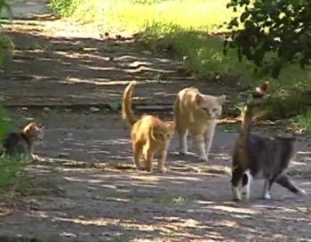 Nepilngadīgu jauniešu banda ar elektrošoku spīdzina dzīvniekus