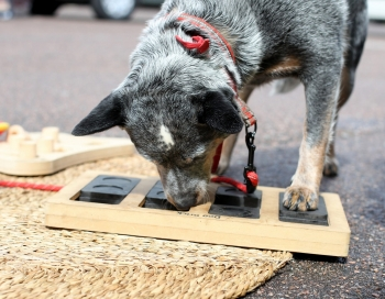 Suņiem radītās spēles un rotaļlietas izstādē ZooExpo