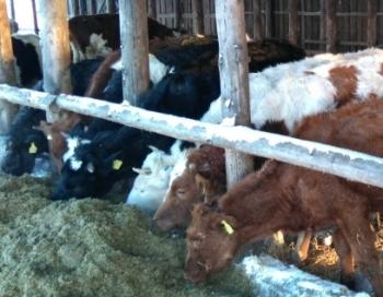 Mūsu pašu zemniekam atņem govis un nebaro